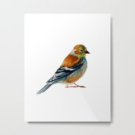 Goldfinch (Winter Feathers) Metal Print