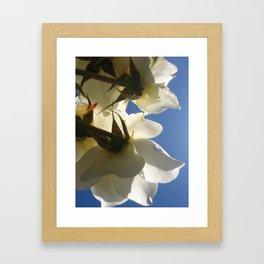 Translucent Roses IV Framed Art Print