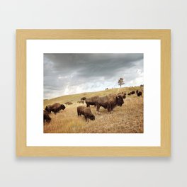 Buffalo Picture Framed Art Print