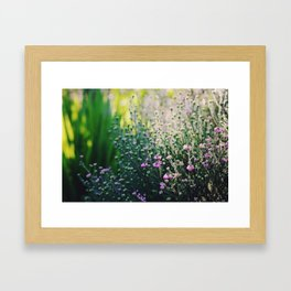 Morning Light Framed Art Print