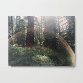 Fairytale Forest - Yosemite Metal Print