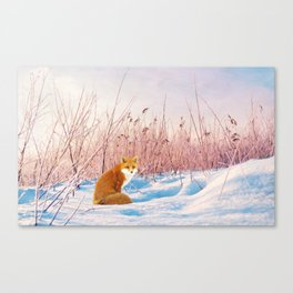 Red Fox in Snow Canvas Print