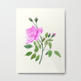 pink rose watercolor painting Metal Print