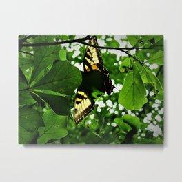 3 winged Tiger Swallowtail Metal Print