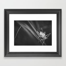 Grashopper Framed Art Print