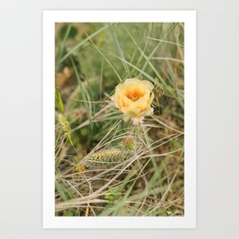 Blooming Cactus // North Dakota Art Print