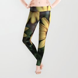 Three Gloriosa daisies Leggings
