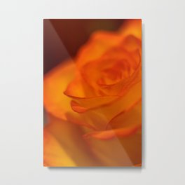 Fiery bright beautiful orange and yellow rose Metal Print