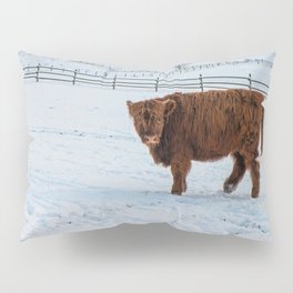 Are you looking at me, Scotish Highland Cow Pillow Sham