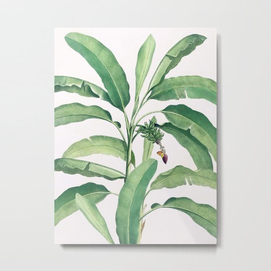 Banana leaves VI Metal Print