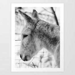 lonely donkey Art Print