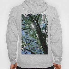 Oak Tree Top Hoody