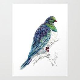 Mr Kereru, New Zealand native wood pigeon Art Print