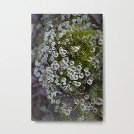 Moss and Friends Metal Print