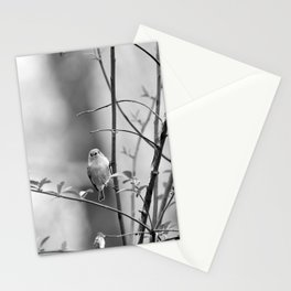 Ruby-Crowned Kinglet, Small Bird Stationery Cards