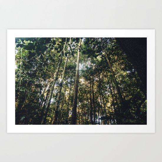 Bornean Jungle Art Print