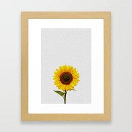 Sunflower Still Life Framed Art Print