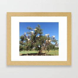 Goats in a tree Framed Art Print