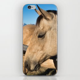 Shy - Horse Plays Coy in Western Wyoming iPhone Skin