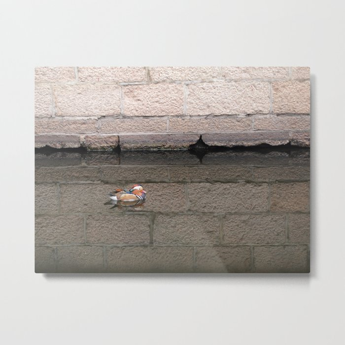 Mandarin Duck Metal Print