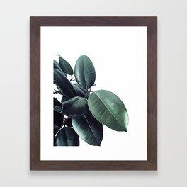 Ficus Elastica #18 #White #foliage #decor #art #society6 Framed Art Print