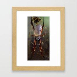 Golden Orb Spider Framed Art Print