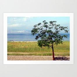 Sea of Galilee Tree Art Print