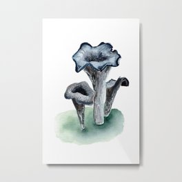 C. cornucopioides Metal Print