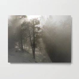 Sunlight and Fog Through Trees Metal Print