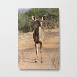 Kudu roadblock Metal Print