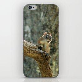 Brown Squirrel iPhone Skin