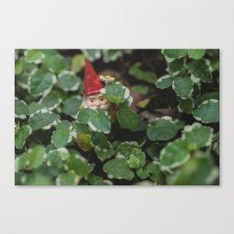 Peek-a-boo Gnome Canvas Print