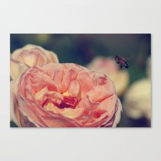 and so the bee comes Canvas Print
