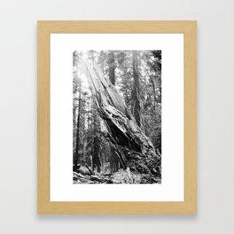 Torn Tree Framed Art Print
