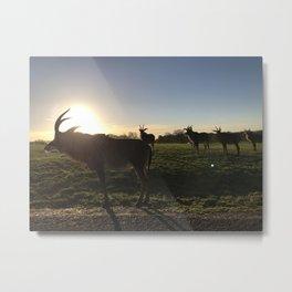Roan Antelope Sunset Metal Print