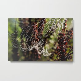 Wingfield Pines - Spider Web Droplets Metal Print