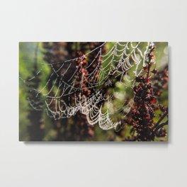 Wingfield Pines - Spider Web Droplets Metal Print