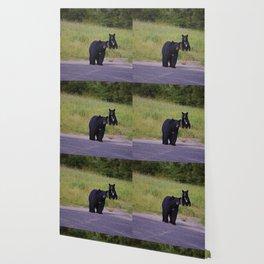 Black bear mother & cub in Jasper National Park Wallpaper