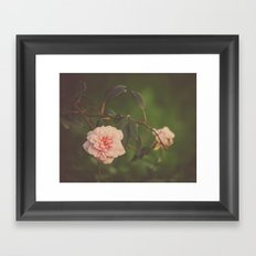 Silent Rose Framed Art Print