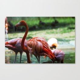 Flamingo Style Canvas Print
