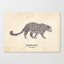 Snow Leopard January 2014 Print #1 Canvas Print