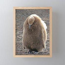 King Penguin Chick Framed Mini Art Print