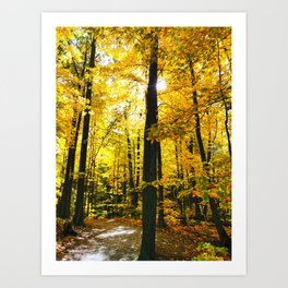 Sun Through Autumn Leaves Art Print