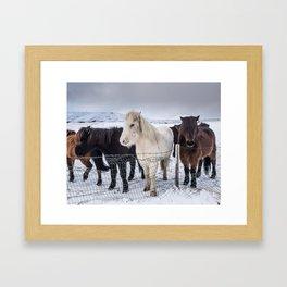 Wild, Wild Horses Framed Art Print