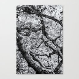 Falling into Spring bw Canvas Print