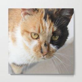 Orange Black and White Tricolor Cat Metal Print