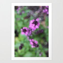 Pink Salvia Art Print