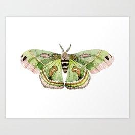 Green Cecropia Moth Art Print