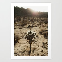 Cholla Cactus in Joshua Tree National Park Art Print