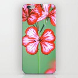 My Melody Dreams iPhone Skin
